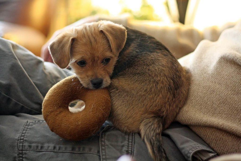 eco-friendly pet owner 6